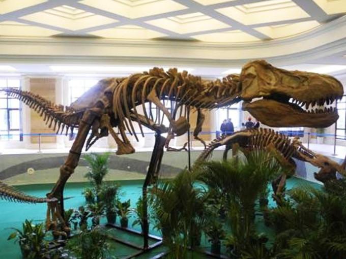 恐龙王国研学营